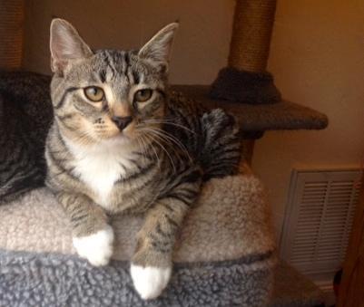 Cat Rescue Newark